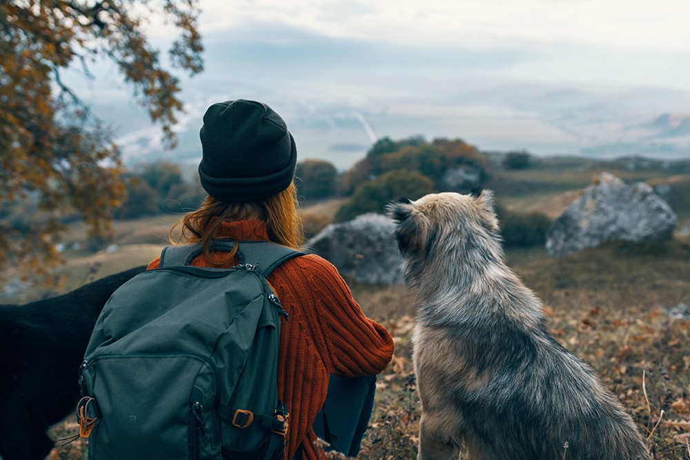 Helpful Hints For A Pet Friendly Road Trip