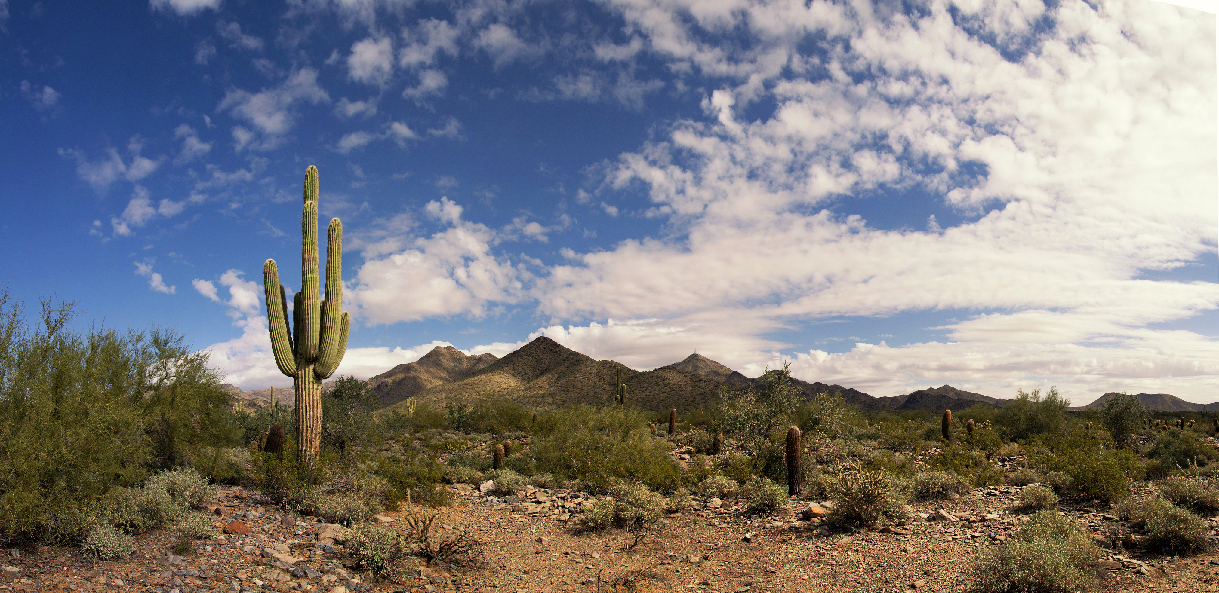 Cactus Highway Blooms with Color this Spring